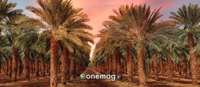 Cosa vedere nella provincia di Al Qassim
