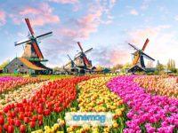 Cosa vedere a Zaanse Schans, Paesi Bassi