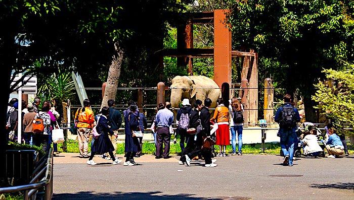 Lo Zoo di Ueno