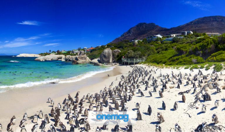 Boulders Beach, Simon's Town | La spiaggia dei Pinguini a Città del Capo, Sudafrica