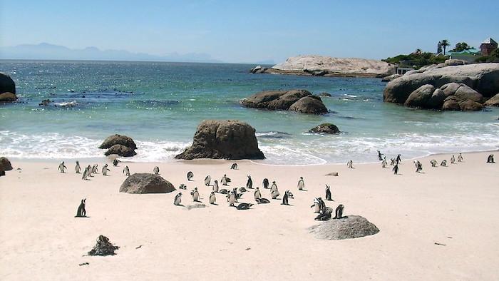 Boulders Beach, Sudafrica   Visuale sul mare e sui pinguini africani