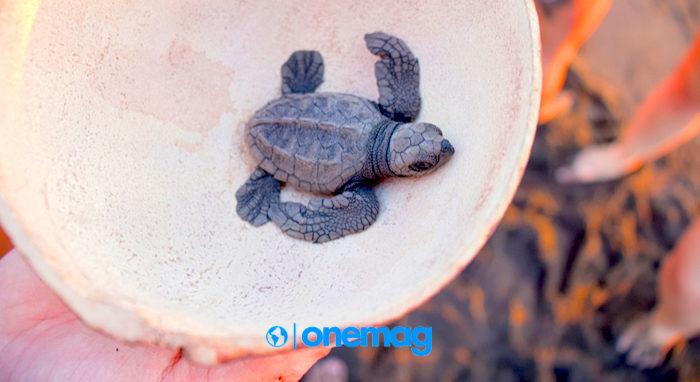 Cosa fare a Monterrico: alla scoperta delle tartarughe marine