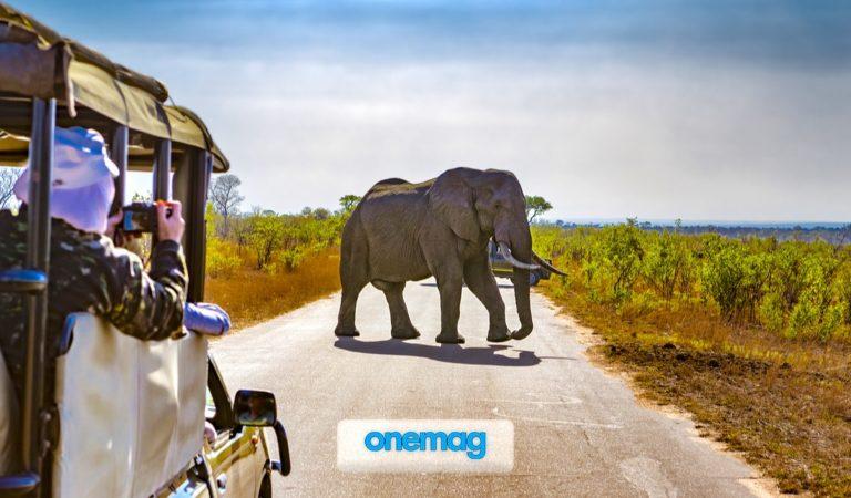 Kruger National Park, Sudafrica | Tour in uno dei più grandi parchi di tutta l'Africa