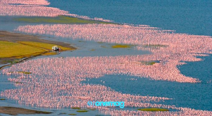 Lago Nakuru, panorama aereo sui fenicotteri in acqua