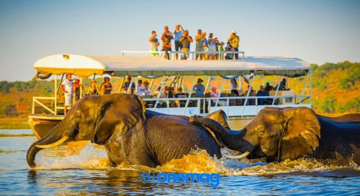 Safari nel Parco Nazionale Chobe