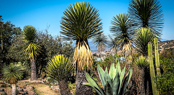 Cosa vedere a San Miguel de Allende, El Charco del Ingenio