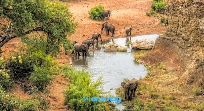 Tutto quello da sapere per un Safari nel Kruger National Park