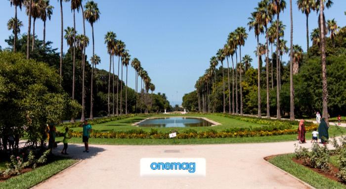 Vista sul principale viale dei Giardini Botanici di Algeri