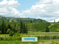 Stupendo paesaggio a San Pietro in Cariano Valpolicella a Verona